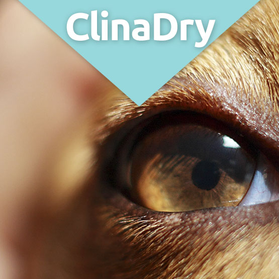 CLinadry eye lubricant for dogs