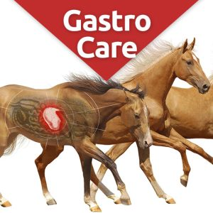 Gastrocare digestive health supplement for horses