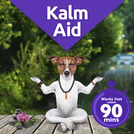 KalmAId calming solution for dogs