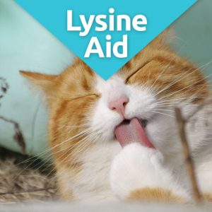 LysineAid feline herpes supplement
