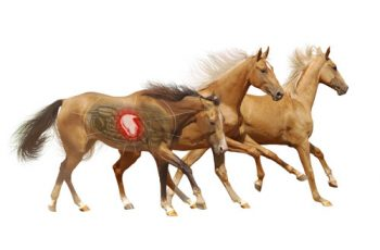 GastroCare for ulcers in horses