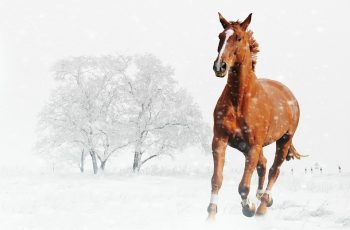 Ten tips for overwintering your horse