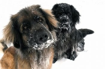 Take good care of your pet in cold weather