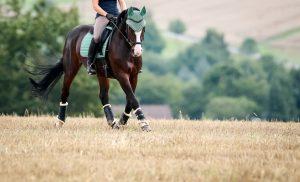 NutriScience Horse Fitness