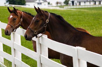NutriScience Horses