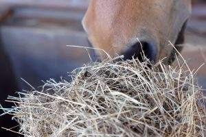 NutriScience Horse Forage