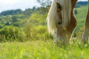 NutriScience Horse Grass