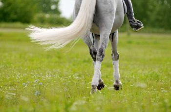 Horses Legs in Summer